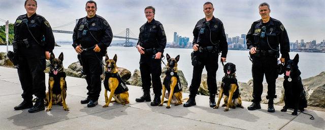 K-9 Unit   San Francisco Police Department